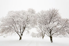 Tree lined road covered in snow Stock Photo