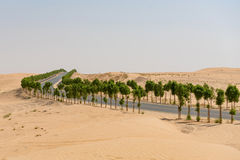 Tree lined road through desert landscape Royalty Free Stock Photo