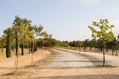 Tree lined road in park Royalty Free Stock Photos