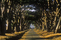 Tree lined road, Point Reyes, CA Stock Photo