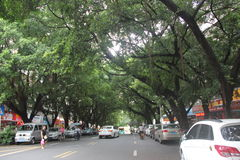 Tree-lined road in SHEKOU SHENZHEN Stock Photos
