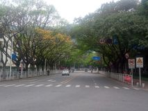 The tree lined Road in SHENZHEN Royalty Free Stock Photo