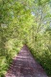 Tree-lined road Stock Photo