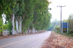 Tree-lined road Royalty Free Stock Images