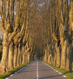 Tree lined road at sunset Stock Photo