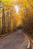 Tree-lined road Tuscany Royalty Free Stock Photo