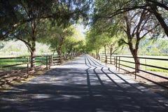 Tree lined road, Upper Ojai, California, USA Stock Image