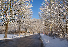 Tree lined road in winter Stock Photography