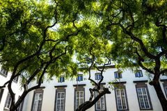 Tree Lined Shopping Street in  the centre of Funchal on the Island of Madiera Stock Images
