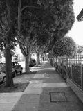 Tree lined side walk Stock Images