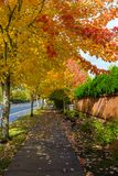 Tree Lined Sidewalk in Fall Season USA America. Tree lined sidewalk in North American suburban neighborhood during fall season United States America Royalty Free Stock Images