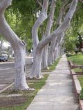 Tree lined sidewalk Royalty Free Stock Images