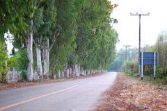 Tree-lined Straße lizenzfreie stockbilder