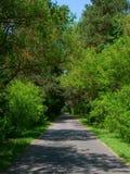 Tree-lined Straße lizenzfreies stockfoto