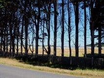 Tree-lined Straße Lizenzfreies Stockbild