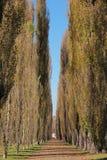 Tree-lined Straße lizenzfreie stockfotografie