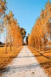 Tree lined street Royalty Free Stock Photo