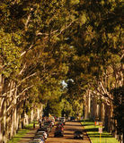 A tree lined street Royalty Free Stock Photos