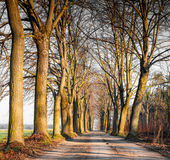Tree-lined street in autumn Stock Images