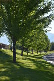 Tree lined street. Beautiful tree lined street in the summer Stock Photography