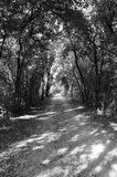 Tree-lined street. Black and white tree lined dirt road Stock Image