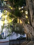 Tree lined street. Blue sky's green ivy covered building classic tree Stock Image