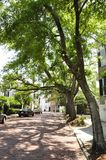 Tree lined street, Charlston Stock Images