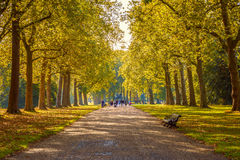 Tree Lined Street in Hyde Park Royalty Free Stock Photography