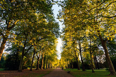 Tree Lined Street in Hyde Park Stock Photos