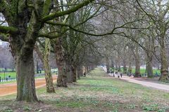 Tree lined street in Hyde Park London, late winter. Season Royalty Free Stock Images
