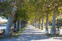 Tree-lined street on the Lake Royalty Free Stock Photo
