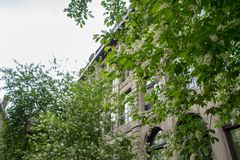 A tree lined street in old Montreal royalty free stock photography