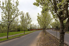 Tree Lined Street in Residential Area spring season Royalty Free Stock Photo
