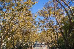 Tree-lined street in a residential neighborhood on a sunny autumn day. Oakland, San Francisco bay, California Stock Photography