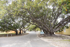 Tree-lined Street at Rottnest Island Royalty Free Stock Image
