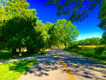 Tree Lined Street. A shady tree lined street Royalty Free Stock Photography