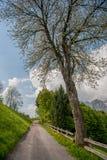 Tree lined street Stock Photography
