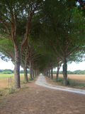 Tree Lined Street on the West Coast of Italy Stock Photos