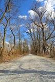 Tree Lined Street During Winter. Beautiful tree lined gravel road during winter Stock Images