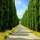 Tree lined Tuscan lane Stock Photo