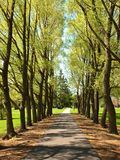 Tree lined walkway Stock Image