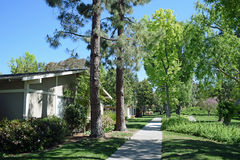 Tree lined walkway in Laguna Woods, Caliornia. Image shows a tree lined walkway in  the heart of the senior retirement community of Laguna Woods, in Southern Stock Image