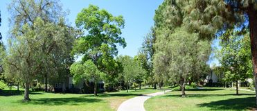 Tree lined walkway in Laguna Woods, Caliornia. Image shows a panorama image of a tree lined walkway in  the heart of the senior retirement community of Laguna Royalty Free Stock Photo
