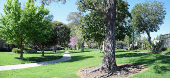 Tree lined walkway in Laguna Woods, Caliornia. Image shows a panorama image of a tree lined walkway in  the heart of the senior retirement community of Laguna Royalty Free Stock Photography