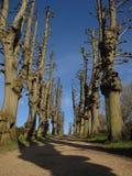 Tree-lined weg Stock Fotografie