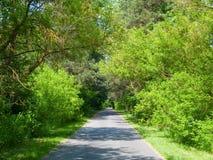 Tree-lined weg Stock Afbeeldingen