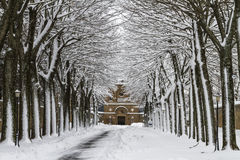Tree-lined weg in de winter Stock Afbeelding