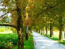 Tree-lined weg van een kleurrijke tuin stock foto