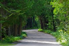 Free Tree Lined Winding Road Royalty Free Stock Image - 23661936