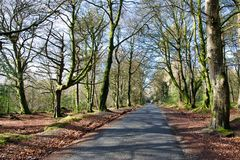 Autumn Forest Road in Ireland royalty free stock photography